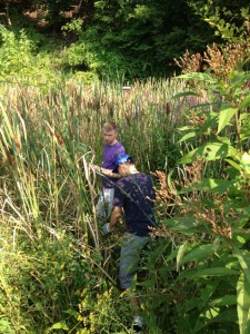 Noxious purple loosestrife removal, Sept 2015