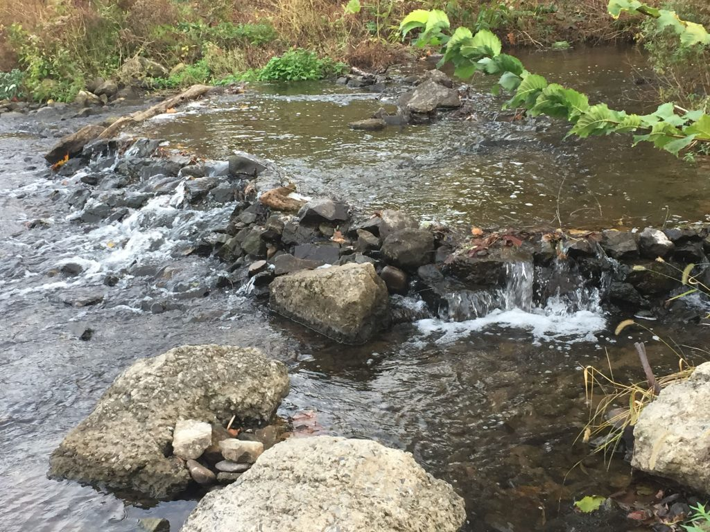 Turbulence and aeration in a small stream near the Delaware Canal - submitted by Colin Lenskold