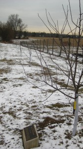 The Row of Fruit Trees at LaFarm, Planted in Memory of Brian Hendrickson